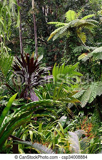 Tropical Garden - csp34008884