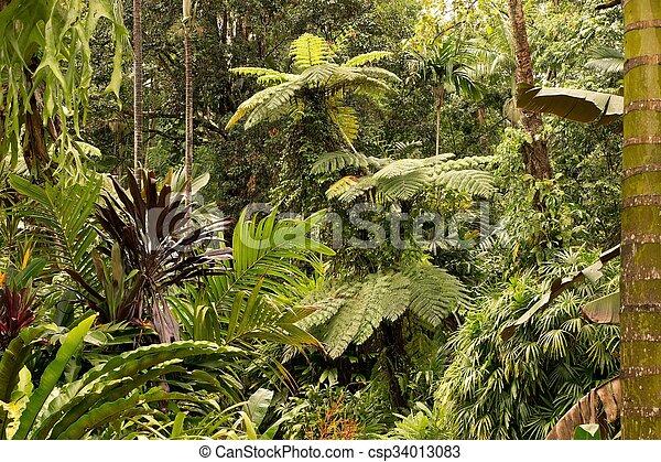 Tropical Garden - csp34013083