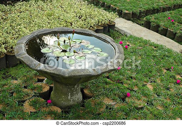 tropical garden - csp2200686