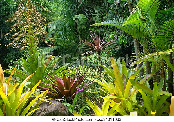 Tropical Garden - csp34011063