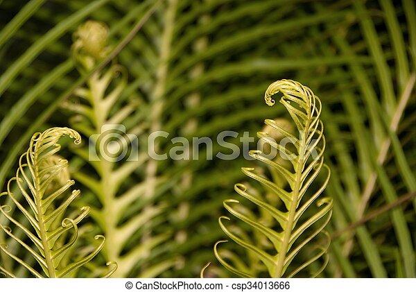 tropical garden - csp34013666