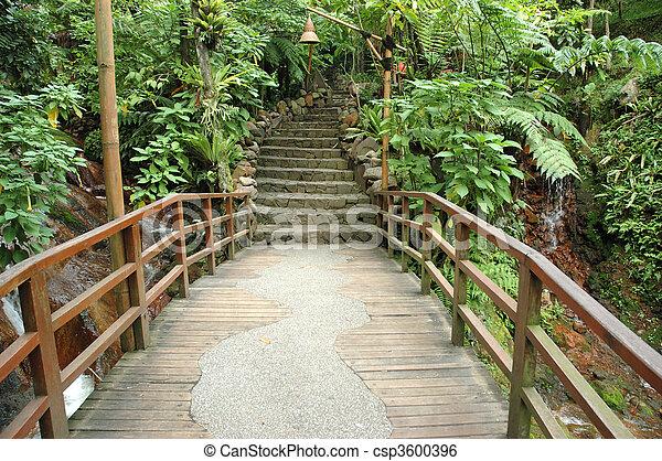 tropical garden - csp3600396