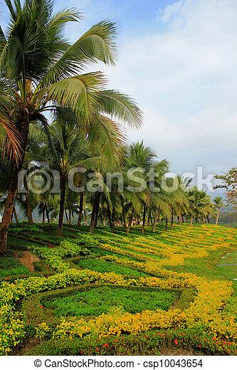 tropical garden - csp10043654