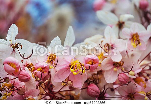Tropical garden - csp57202356