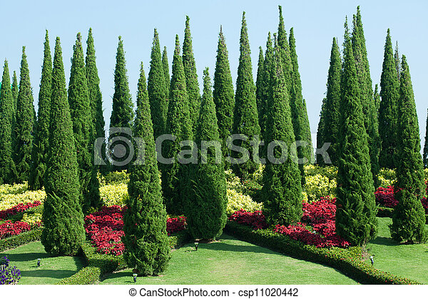 Tropical Garden - csp11020442
