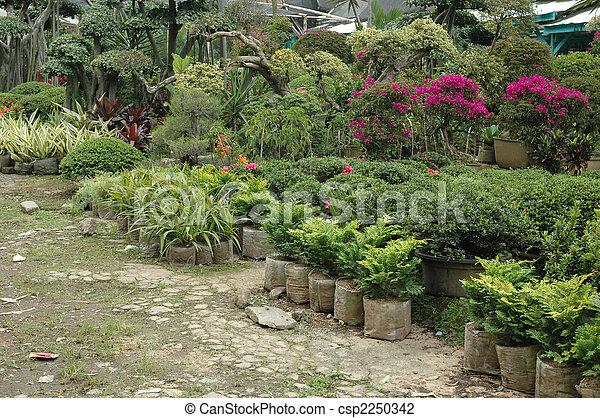 tropical garden - csp2250342