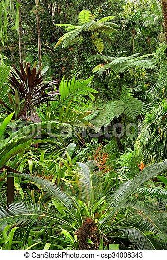 Tropical Garden - csp34008343
