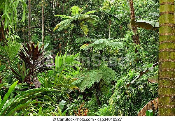 Tropical Garden - csp34010327