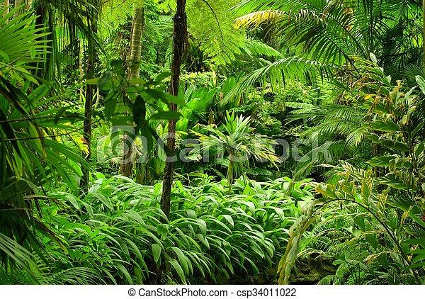 Tropical Garden - csp34011022