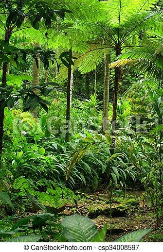 Tropical Garden - csp34008597