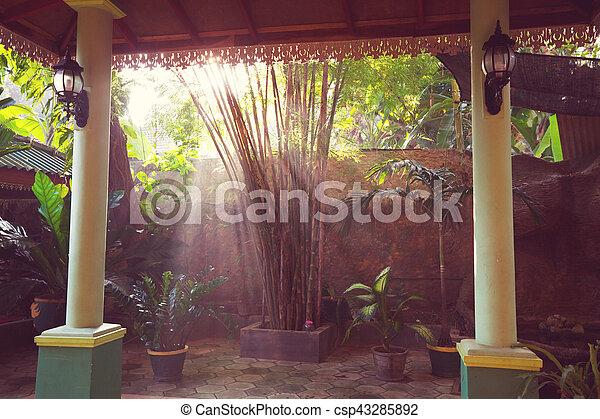 Tropical garden - csp43285892