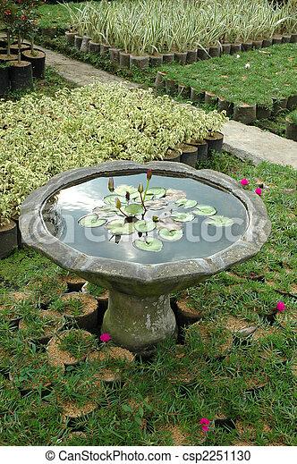 tropical garden - csp2251130