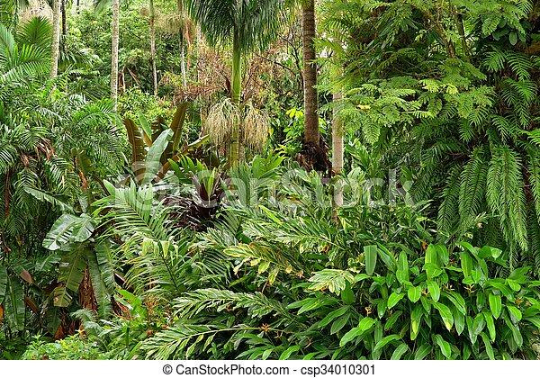 Tropical Garden - csp34010301
