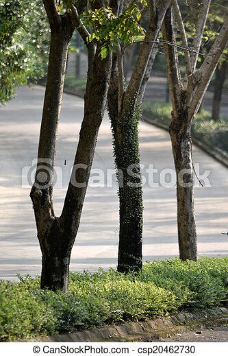 tropical garden - csp20462730