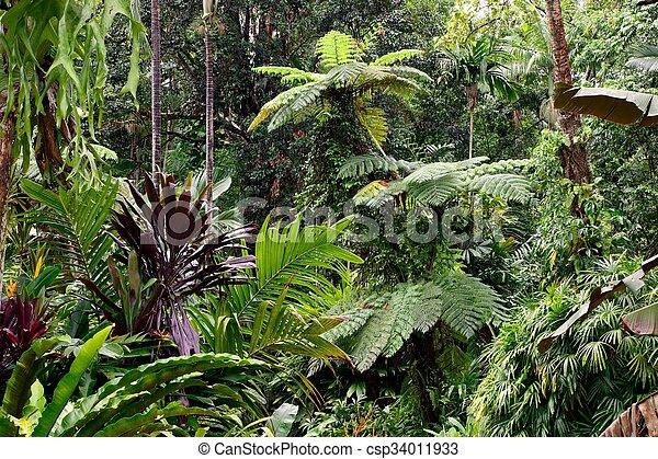 Tropical Garden - csp34011933