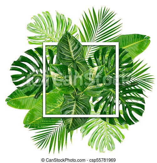 Tropical Green Leaves Layout Isolated On White Background Canstock For a longer life, keep palm fronds out of direct sunlight to maintain the muted green color longer… https www canstockphoto com tropical green leaves 55781969 html