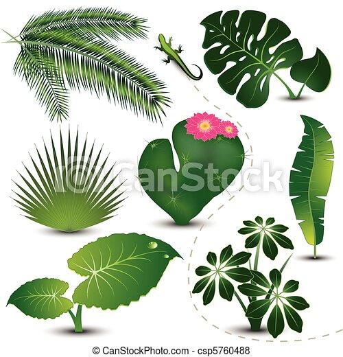 tropical, hojas, colección - csp5760488