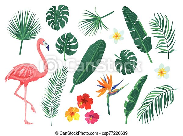Tropical Leaves Flowers Vector Illustration Set Cartoon Flat Element With Monstera Hibiscus Frangipani Flamingo Canstock More color, more fragrance, more size, and even more butterflies. https www canstockphoto com tropical leaves flowers vector 77220639 html