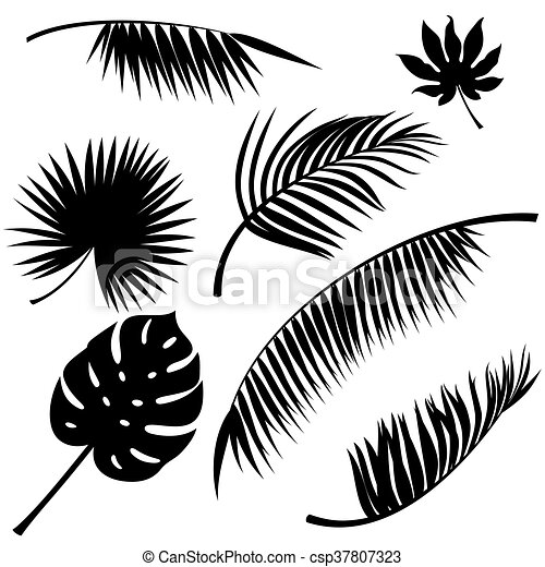 Tropical Leaves Vector Tropical Leaves Black Vector Silhouettes On White Canstock Here you can explore hq tropical leaves transparent illustrations, icons and clipart with filter setting like polish your personal project or design with these tropical leaves transparent png images. https www canstockphoto com tropical leaves vector 37807323 html
