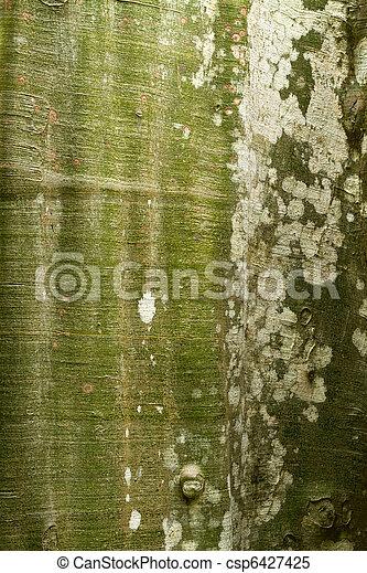 Detalle de madera tropical - csp6427425