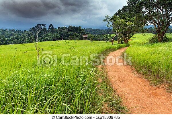 Tropical meadow - csp15609785