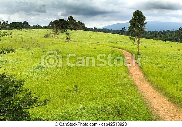 Tropical meadow - csp42513928