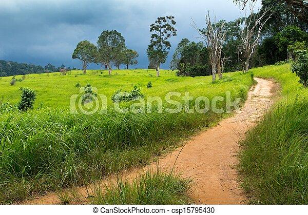 Tropical meadow - csp15795430