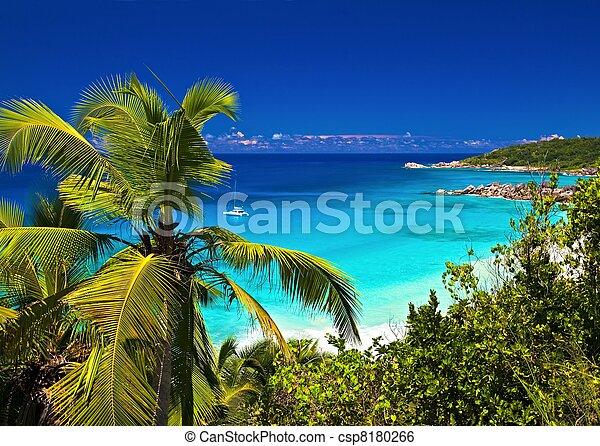 Una melodía tropical - csp8180266
