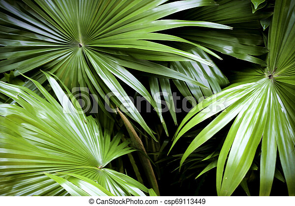 tropical nature green palm leaves pattern - csp69113449