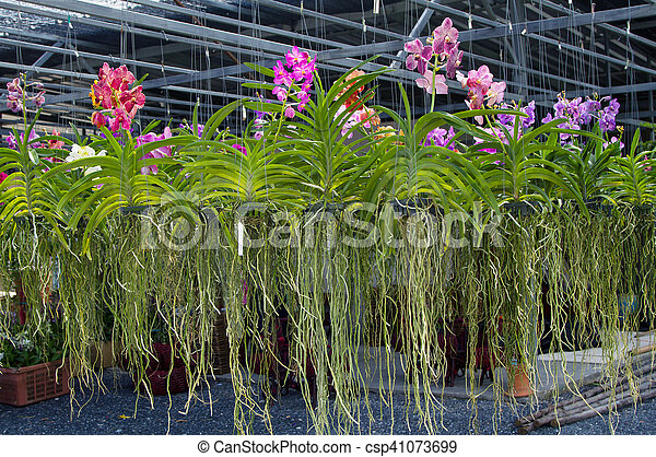 tropical orchid plants in greenhouse sale of indoor flowers