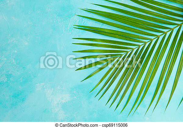 Tropical palm leaf on blue background. Top view. Copy space. - csp69115006