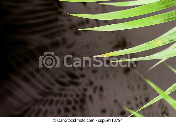 tropical palm leaf shadow on white wall background - csp69113794