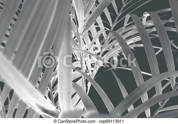 tropical palm leaf tree on wall background - csp69113911