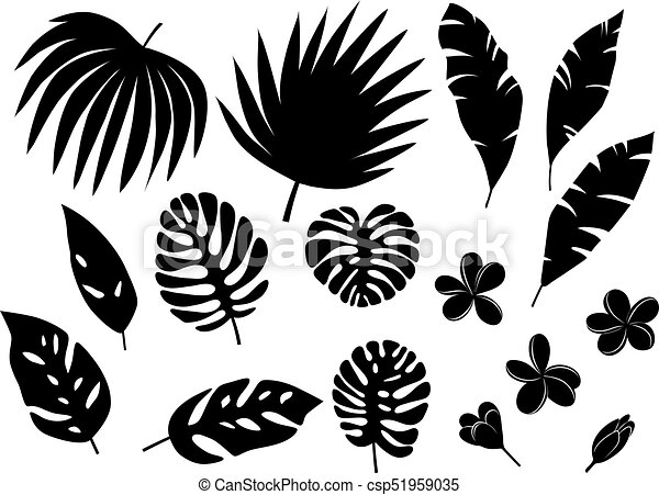 tropical palm leaves - csp51959035