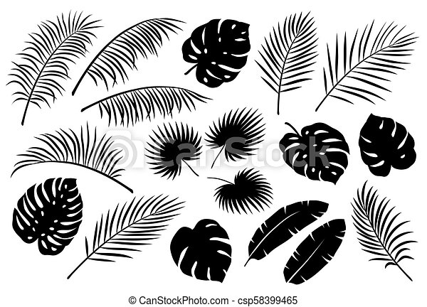Tropical Palm Leaves Set Tropical Jungle Black Palm Leaves Set On White Background Canstock Tropical leaves clipart is hand drawn set of 31 floral elements in vector eps format and png format on transparent background. https www canstockphoto com tropical palm leaves set 58399465 html