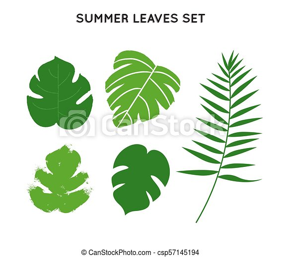Tropical Palm Tree Summer Leaves Set Tropical Summer Leaves Set Hand Drawn Green Palm Tree Leaf Collection On Isolated