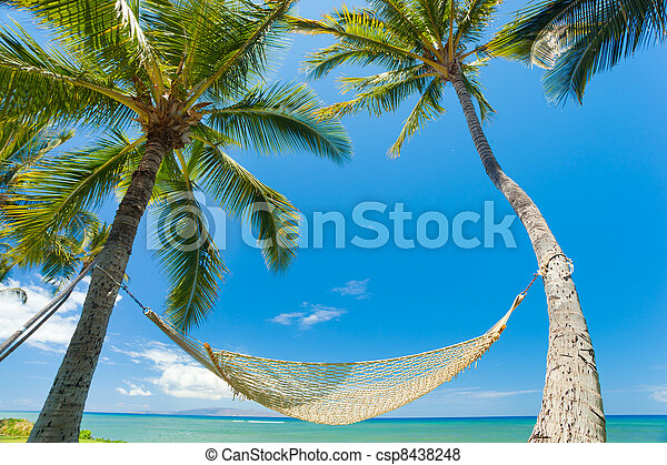 Tropical Palm Trees and Hammock - csp8438248