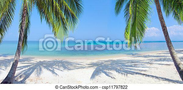 Una playa tropical panorámica con palma de coco - csp11797822