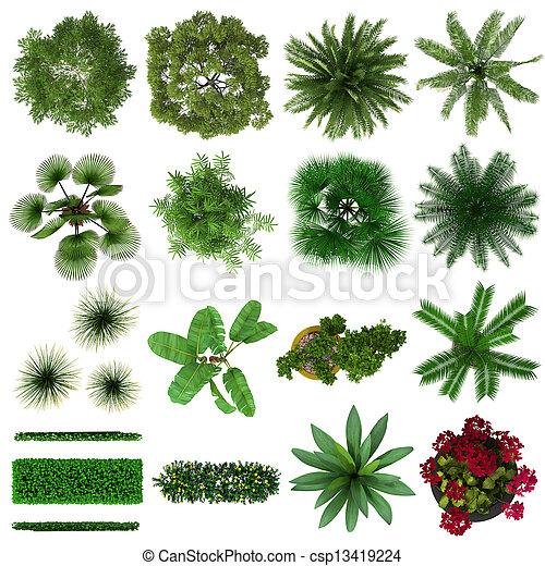tropical, plantas, colección - csp13419224