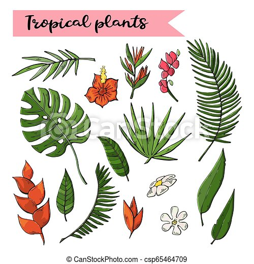 Tropical Plants Set Collection Isolated On A White Background