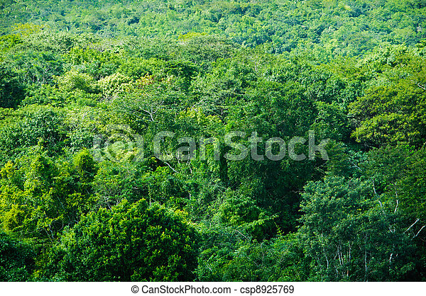 tropical rainforest background