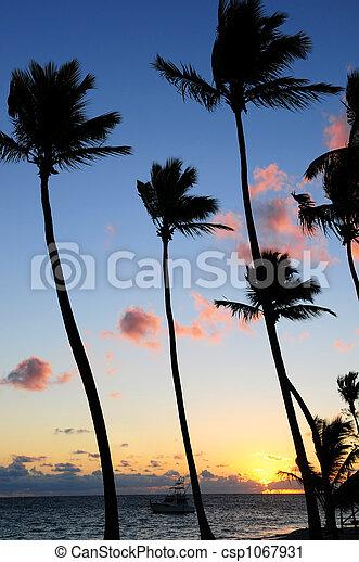 tropical, salida del sol - csp1067931