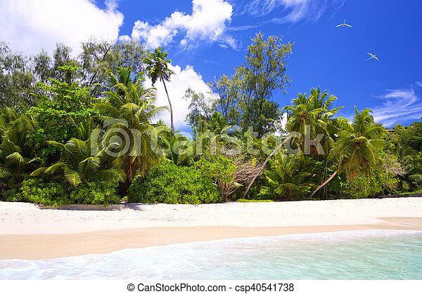Playa tropical Seychelles - csp40541738