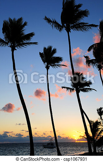 Tropical sunrise - csp1067931
