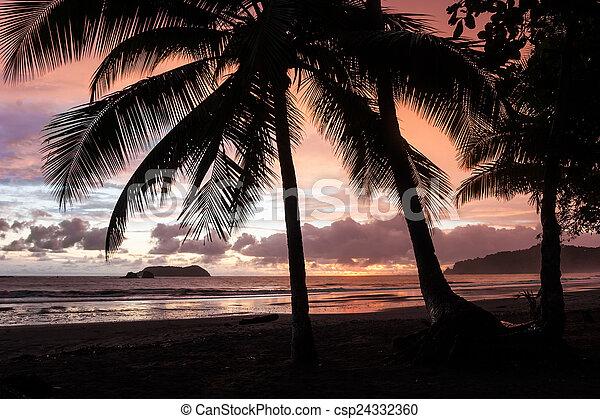 Tropical Sunset - csp24332360