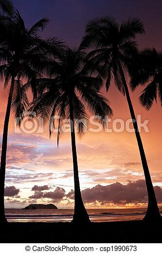 Tropical Sunset - csp1990673