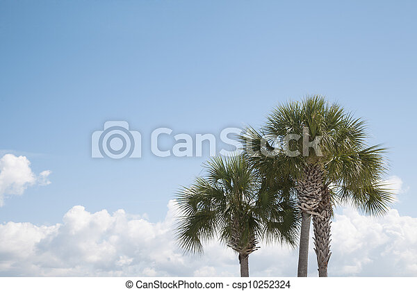 Tropical Trees and Sky Background - csp10252324
