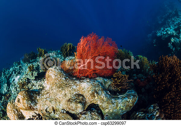 Tropical underwater world with coral reef. Red seaweed at reef. Beautiful place for diving - csp63299097