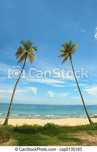 tropical vacation - csp0135163