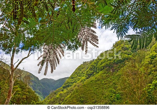 Green Forest Valley - csp31358896
